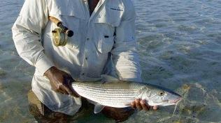 Ganger Bonefish 001