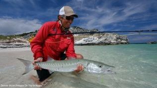 Saltwater flyfishing woman releasing barracuda.