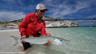 Saltwater flyfishing woman releasing barracuda.