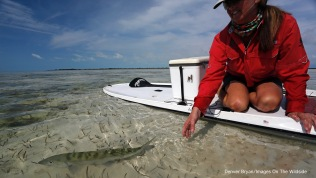 Saltwater flyfishing woman on paddle board releasing bonefish.